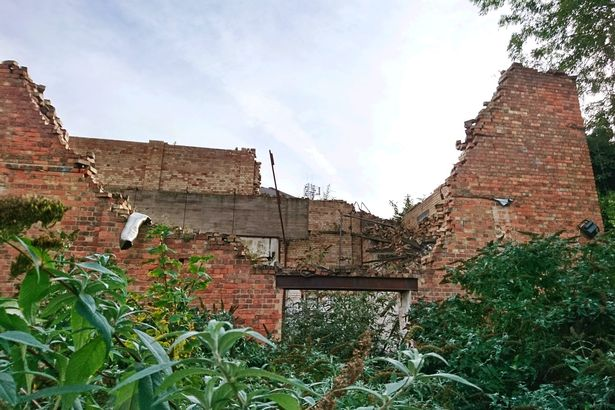 'Nightmare' plant Japanese knotweed has invaded the Derby Hippodrome